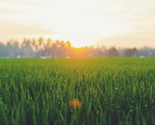 UK Warrington Artificial Grass Lawn fitters 1