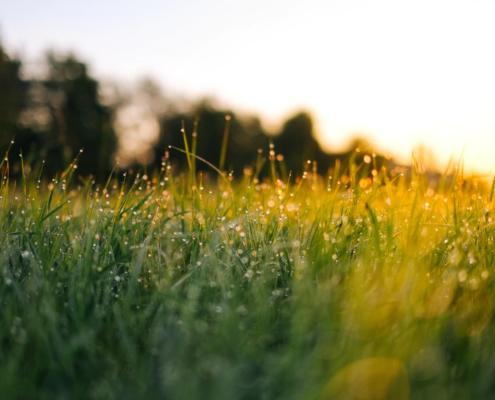 UK Warrington Artificial Grass Lawn fitters